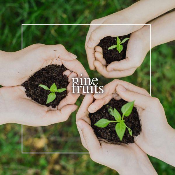 holding-mini-plant (1)